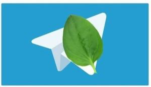 Реакция пользователей соцсетей на сбой в работе Telegram